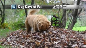 Dog Days of Fall: Cold Air Plunges South, Widespread Frost and Snow Potential Into Next Week