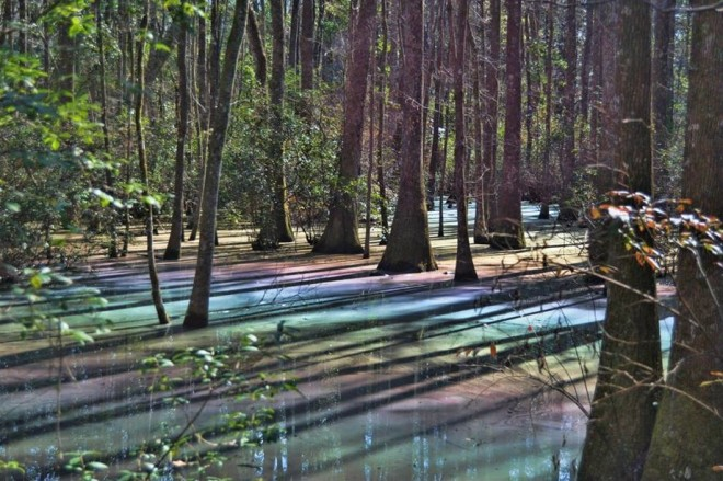 Psychedelic Swamp