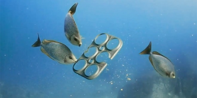 Edible 6-Pack Rings for Sea Life, Reduces Plastic Waste and Saves Lives
