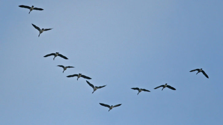 Peak of Fall Bird Migration Underway – Autumn Is in the Air