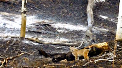Firefighters Continue to Battle the Junkins Wildfire as It Rages in Colorado