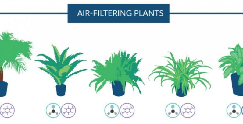 The best air purifying houseplants according to nasa for Air filtering plants