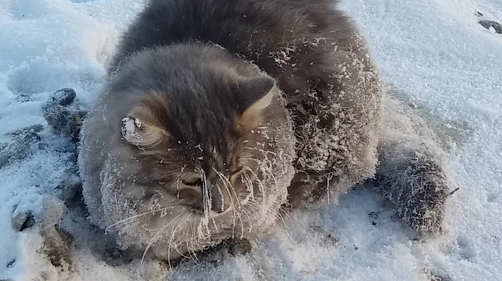 WATCH: Meanwhile in Russia, Cat Found Frozen to the Street in Minus 35° Temps