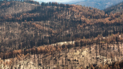 834 Million Dead Trees Heighten Colorado Fire Danger