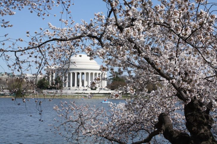 Cherry Blossom Peak Might Happen Earlier Than Ever Before