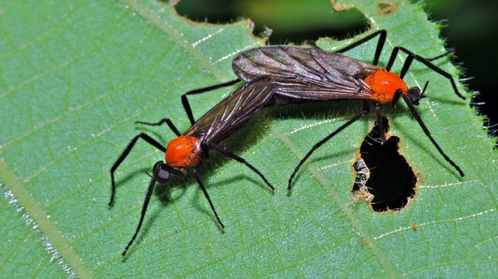 Love bug dating site