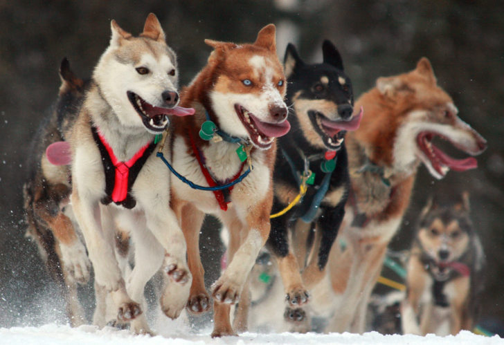 Mush! Iditarod 2017: The Sled Dog Race of the Year Begins