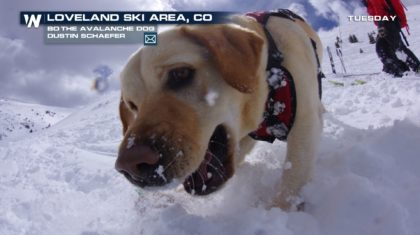 Avalanche Dog in Training
