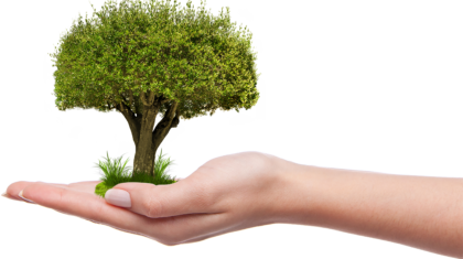 10 Ways to Green Up Arbor Day