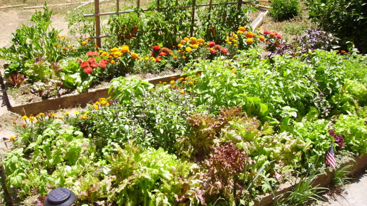 Will Above Average Temps Affect My Garden WeatherNation – What Should I Plant in My Garden