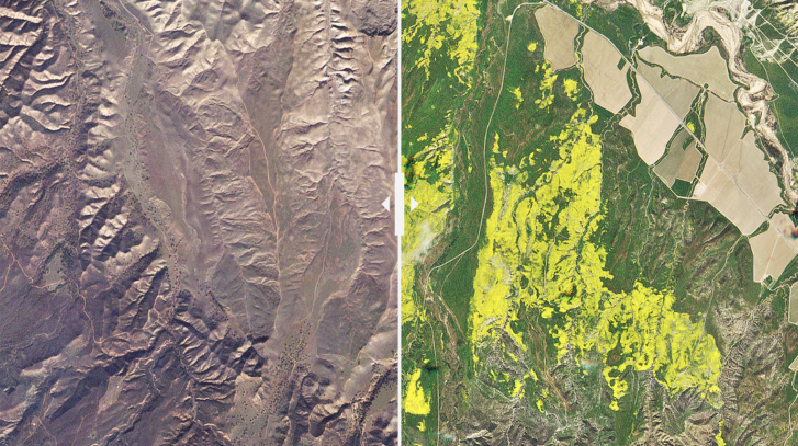 California's 'Super Bloom' Is So Spectacular It Can Be Seen From Space