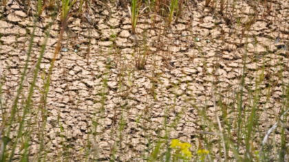 Dried Up: Impacts of Florida's Drought