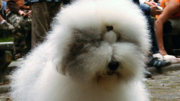 Humidity– Why Does it Ruin Your Hair?