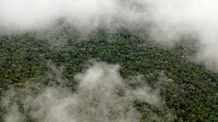 New Study Shows the Amazon Rainforest Makes its Own Rainy Season