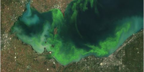 Senate Passes Great Lakes Admendment to Fight Harmful Algal Blooms