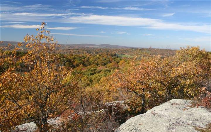 New Research: Forests Minimize Severe Heat Waves
