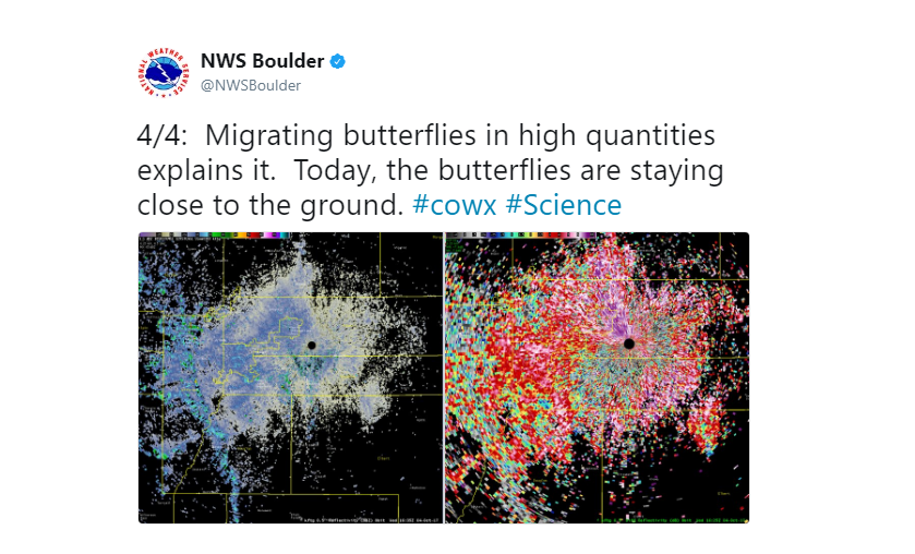 Radar Signature Turns Out to Be Migrating Butterflies