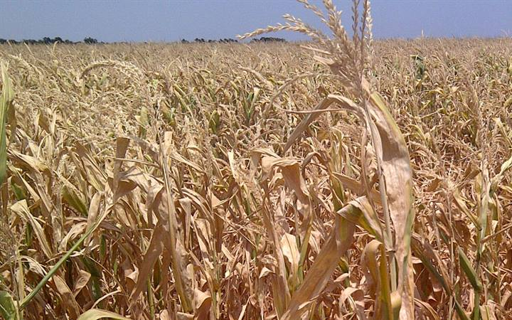 Predicting Midwest Corn Yield and Quality from Weather