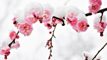 When to Expect Your Last Spring Freeze