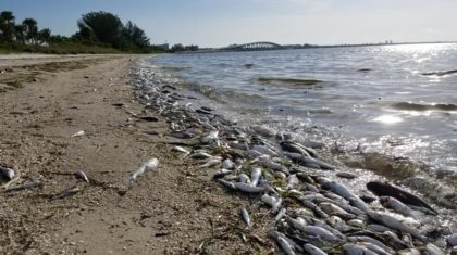 The Red Tide: Disgusting and Deadly