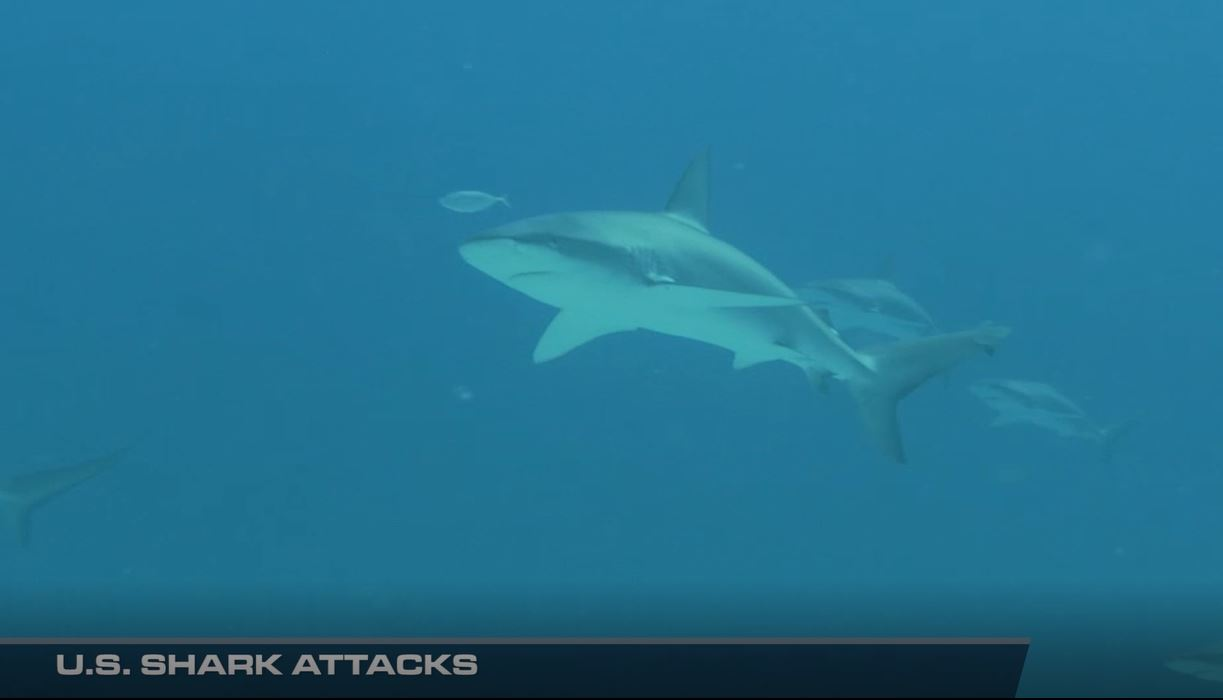 Recent Shark Attacks in the U.S.