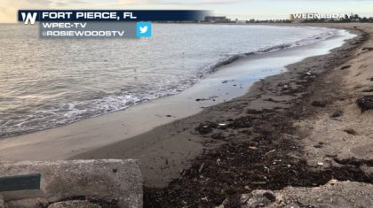 Red Tide Outbreak Not Over Yet