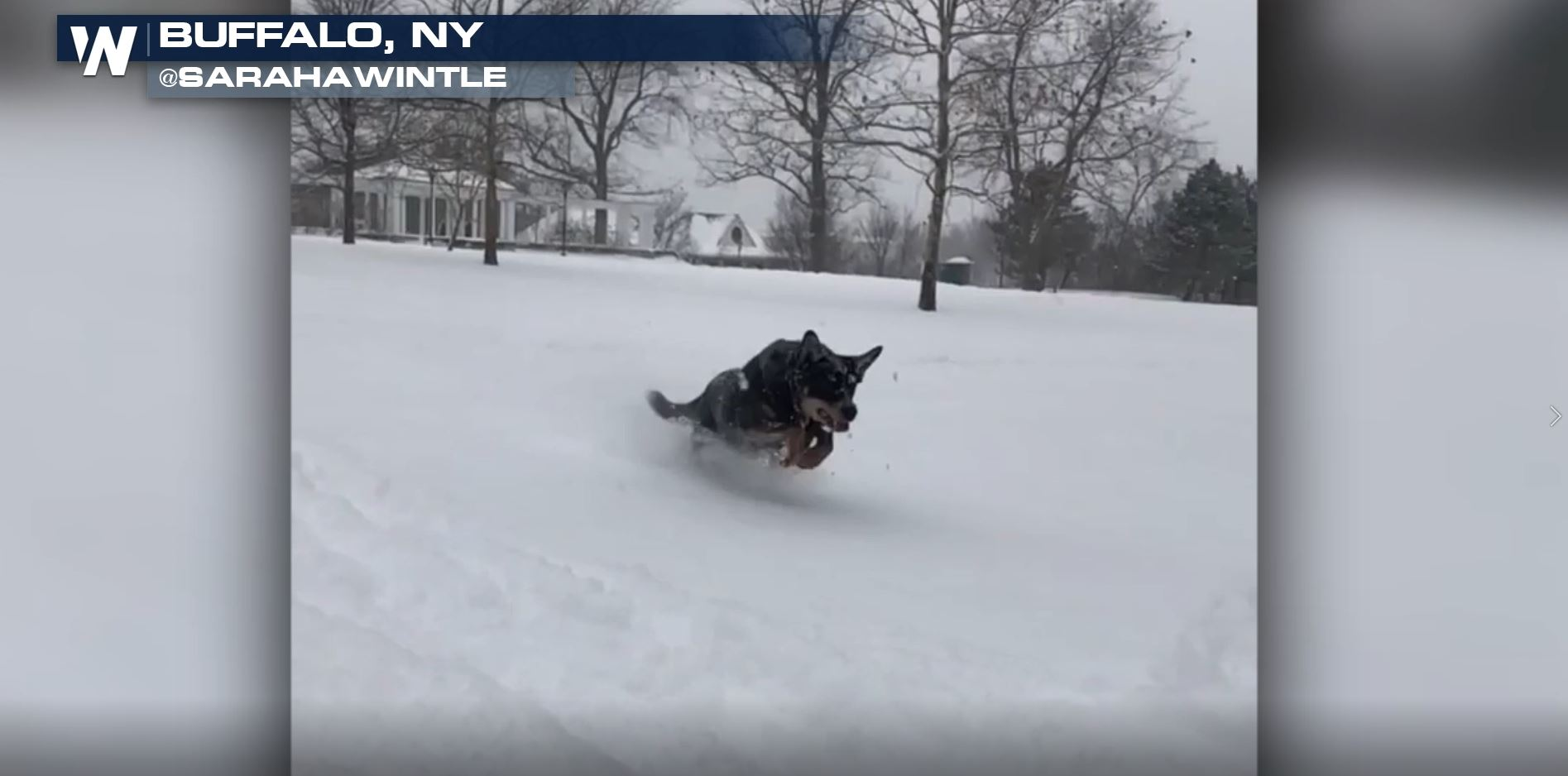 Protect Your Pets from the Cold!
