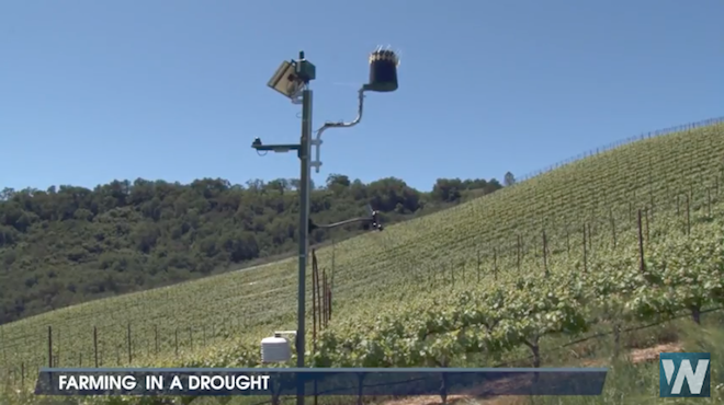 California Drought Produces Tastier & More Complex Wine Grapes