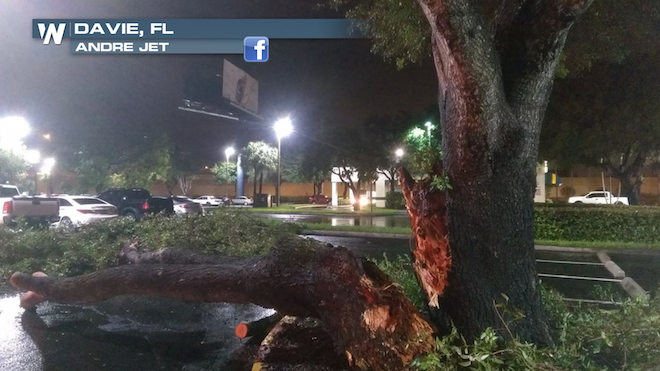 Davie FL Lightning Strikes Tree