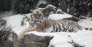 WATCH: Portland Zoo Animals Frolic in a Winter Wonderland