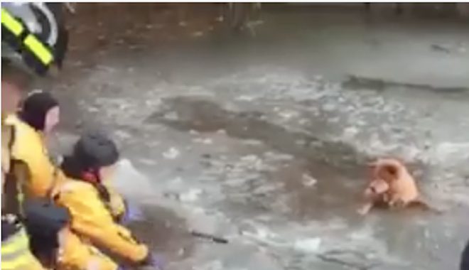 WATCH: Angel the Dog Rescued From Icy Waters