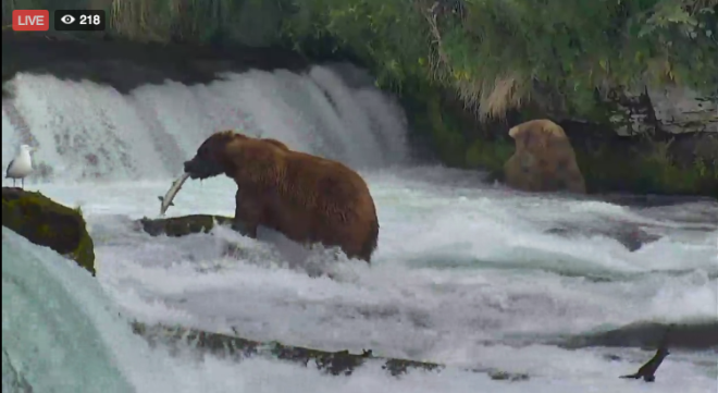 WATCH: Alaska's BearCam Is Back for a Fourth Season