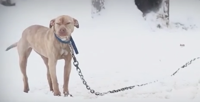 Think Your Dog Can Stand the Cold? Think Again!