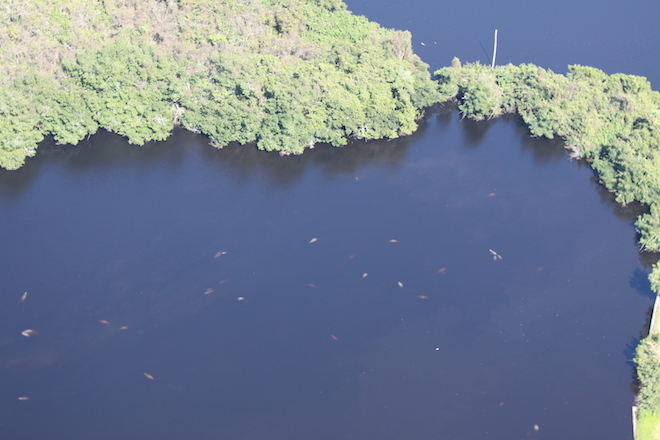 fpl-fort-myers-manatee-park---lee-county_24996236632_o