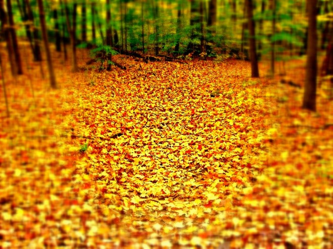 Relax and Enjoy the Fall: Why you Don't Need to Rake