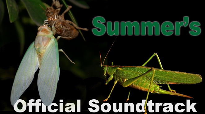 Who's Singing in Your Backyard This Summer? Cicadas and/or Katydids